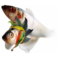 Willem Rasing - Fish