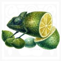 Omar Turcios - Chameleon