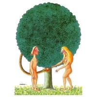 Harca - Adam a Eva