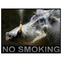 Willem Rasing - Fajčenie zakázané