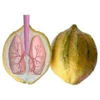 Willem Rasing - Dýchajúci citrón