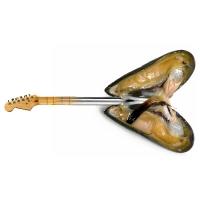 Willem Rasing - Mušľová gitara