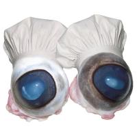 Willem Rasing - Kuchárove oči