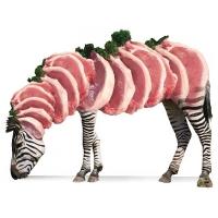 Willem Rasing - Zebra